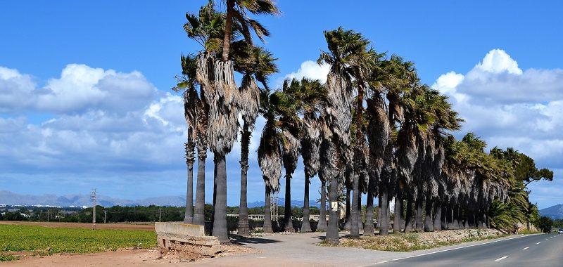 Fotos Mallorca