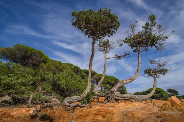 Korsika (6)