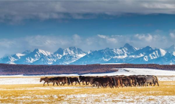 Mongolei (5)